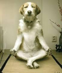 cane meditante
